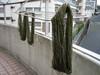Jospun_drying